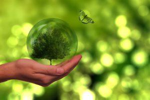 Na dłoni leży szklana kula, w której zamknięte jest drzewo